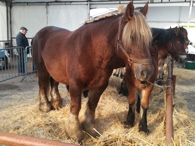 chevaux concours