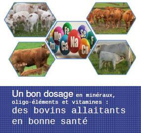 Un bon dosage en minéraux, oligo-éléments et vitamines : des bovins allaitants en bonne santé